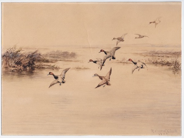 """Eight redheads descending into a lakeside marsh, a watercolor picturing the ducks with wings extended, ready for a landing, the ducks in the foreground with more coloring than those farther away, the colors of the marsh and water somewhat muted, signed in the lower right corner """"Roland Clark / 1922."""" Roland Clark."""