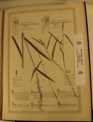 Herbarium of the Most Important Grasses of the Field and the Forest.