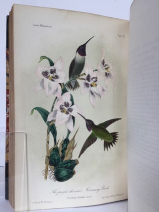 ILLUSTRATIONS OF THE BIRDS OF CALIFORNIA, TEXAS, OREGON, BRITISH AND RUSSIAN AMERICA, Intended to Contain Descriptions and Figures of all North American Birds not Given by Former American Authors and a General Synopsis of North American Ornithology.